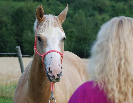 Ausbildung zum Pferde-Kompetenz-Practitioner