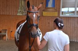 Reitabzeichen Lehrgang in der 5 Sterne Reitschule in Mainburg
