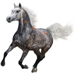 Druckpunkte beim Pferd