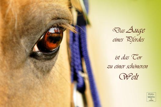 Das Auge eines Pferdes ...