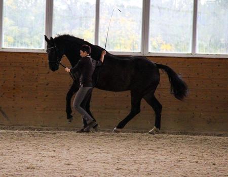 Ganzheitliches Pferdetraining
