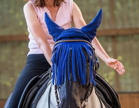 regionales Coaching - Teilnehmer/innen MIT oder OHNE Pferd