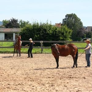Horsemanship- Kurs auf der Absarokee Horse Farm