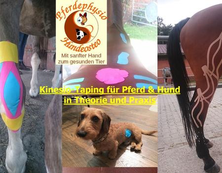 Praxisseminar Kinesio Taping für Pferd und Hund