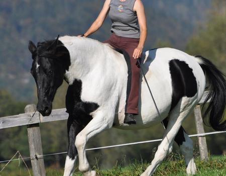 Level 1 Einsteiger MIT oder OHNE Pferd