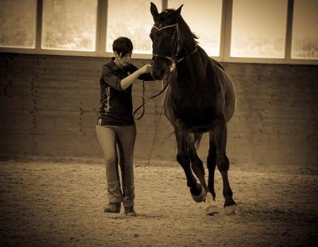 Ganzheitliche Körperarbeit und Bewegungstraining beim Pferd