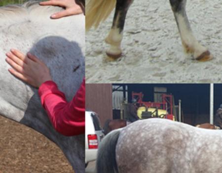 Sehen, fühlen, Probleme am Pferd erkennen