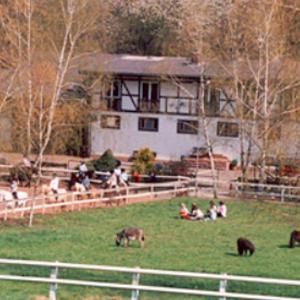 Welsh-Gestüt Breuberg