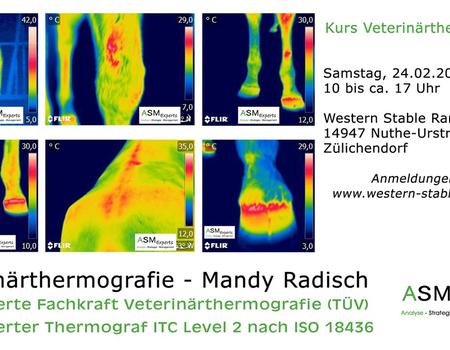 Vortrag zur Veterinärthermografie