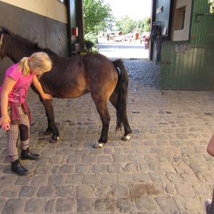 Ponys putzen gehört einfach dazu.....