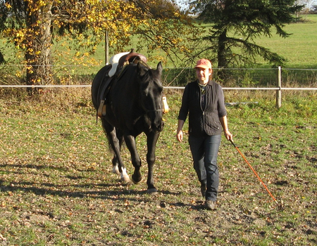 Öffentliches HorsemanshipTraining