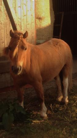 Pony Lara