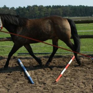 Bewegungstherapie fürs Pferd