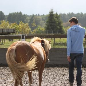 Bildungsurlaub und Seminare mit Pferden