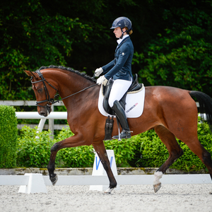 "Unser Verkaufspferd ""Farina"", 5 jährige Stute von Floriscount x Don Crusador x Santorini"