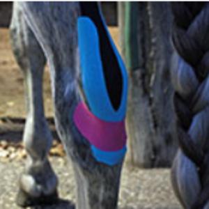 Physio Taping beim Pferd