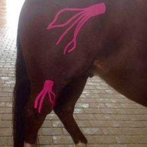 Kinesio Taping für Pferde