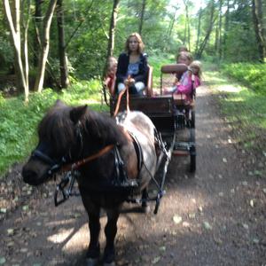 Ponykutsche fahren mit Floh ist immer ein Abenteuer :-))