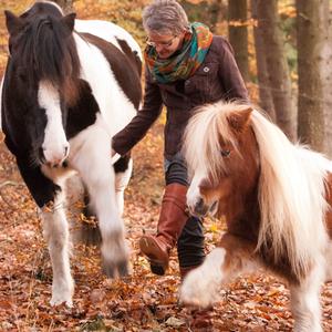 Pferde-Freundschaft