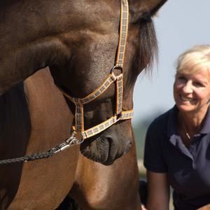 Pferde -   Osteopathie & Akupunktur & Reitlehre