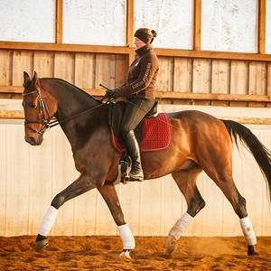 Pferde- und Reiterausbildung