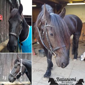 Batanomi Horsehair Extensions & Care