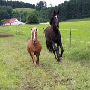 Pferdehof Zur Grössermühle