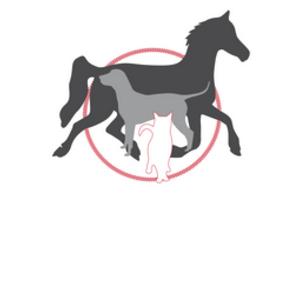 Tierarzt für Pferde