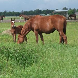 Pferdeparadies Freienhagen