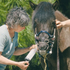 Pferdezahnärztin Angela Losberg
