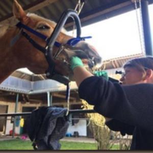 Tierärztliche Praxis für Chiropraktik