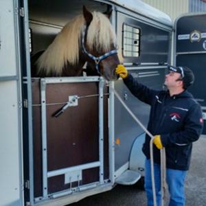 MF Pferdetransport
