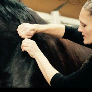 Health and Horse