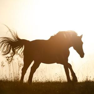 Pferdefotos und Fotokunst