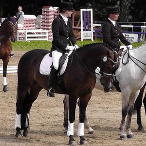 Klassische Ausbildung für jung und alt bis Kl.M, gerne auch Ponys bis FEI