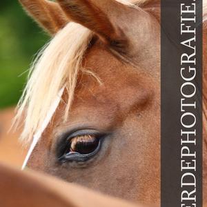 Individuelle Pferdefotografie Müller-Uloth