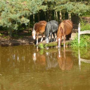 Pferdeparadies Beckstein - 5-Sterne LAG Stall www.beckstein-pferde.de