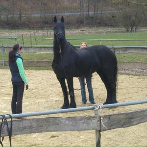 Mobiles Horsemanship Training