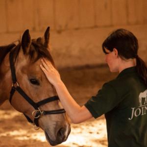 Lucia Ebert Ausbildung für Mensch und Pferd