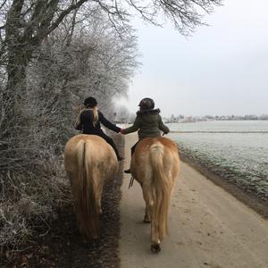 Horsemanship Zentrum Susanne Fischer