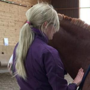 Tierphysiotherapie Anke Gutsch