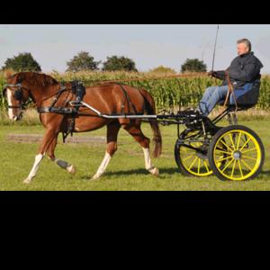 Pferdesport Sagkob
