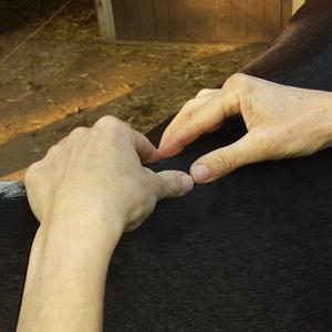 Pferdephysiotherapie Hornickel