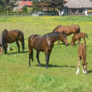 Pferdezucht Franz