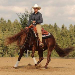 SWS Westernhorses