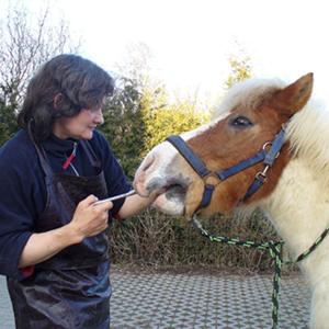 Tierarztpraxis Katrin Özcan