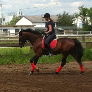 Pferdetraining Odenwald