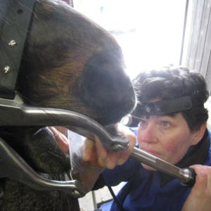 Tierarztpraxis Barbara Thünker