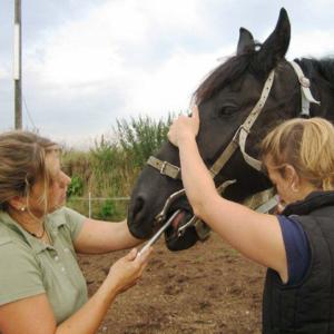 Pferde - Dental - Praktikerin GABI SCHMIDT